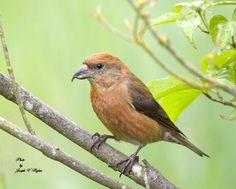 northwest birds identification | Birds found around waters in the Lowland Pacific Northwest