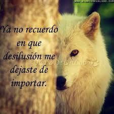Resultado de imagen de dances with wolves quotes ESPAÑOL Lone Survivor Quotes, Good Bey, Dances With Wolves, Wolf Quotes, Unique Quotes, Wolf Pictures, Hilario, Lone Wolf, My Spirit Animal