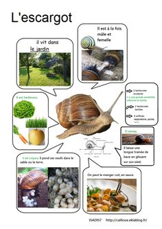 Notre élevage d'escargots - Science and Nature Language Study, French Language, Life Science, Science And Nature, Preschool Science, Snail Farming, Farming Farming, French For Beginners, French Education