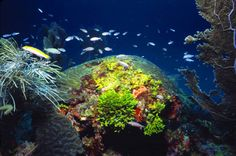 Between Key Largo and Dry Tortugas lies the only living barrier reef ecosystem in the continental United States