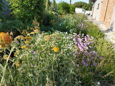 Divoká výsadba hýri farbami počas celého roku. Plants, Plant, Planets