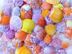 Eggshellent Easter Sanibel Scallop Shells
