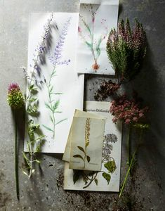 I would love to paint some flowers with water color. A great added touch would be their scientific and common names.