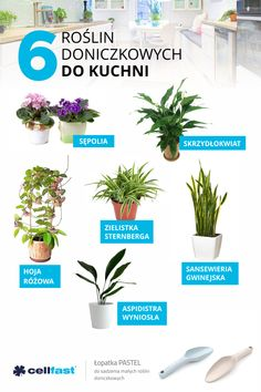 Workshop Design, Interior Plants, Cool Plants, Kids Health, Trees To Plant, House Plants, Planting Flowers, Life Hacks, Diy