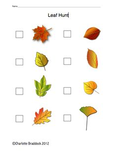 Charlotte's Clips and Kindergarten Kids:  Freebie Leaf Hunt Printable
