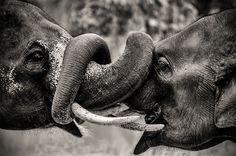 Elephant Hug <3 @Stephanie Close Close kottmann