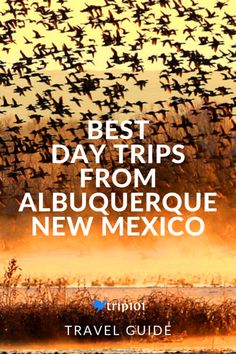 Explore New Mexico outside of Albuquerque with these awesome day trips. Museums, nature parks, and more await! New Mexico Vacation, New Mexico Road Trip, Travel New Mexico, New Mexico Usa, Tennessee Vacation, Mexico Trips, New Mexico Albuquerque, Albuquerque News, Alaska Travel