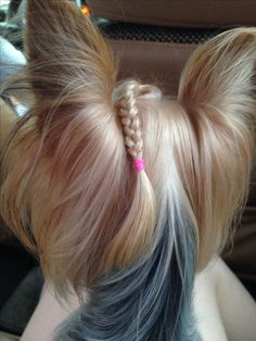 Yorkshire with Braids Yorkies, Yorky Terrier, Bull Terriers, Cute Puppies, Cute Dogs, Poodle Puppies, Lab Puppies, Yorkie Cuts, Yorkie Hairstyles