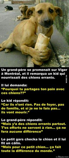 Animals And Pets, Funny Animals, Cute Animals, Happy End, Amor Animal, Faith In Humanity, True Stories, Dog Love, Puppies