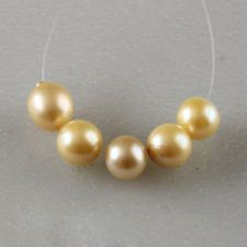 Light golden color Akoya 5 round 8 mm pearls full drilled Lot 40B
