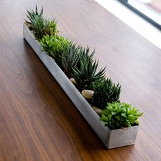 windowsill succulent garden | Succulents garden, Garden boxes and ...
