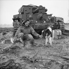 A Cromwell tank crewman of Armoured Division prepares a brew alongside an adopted German calf 8 March