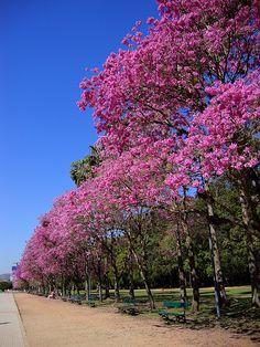 Porto Alegre: a Host City for the 2014 FIFA World Cup Brazil