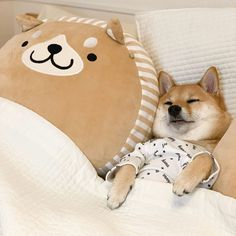 Happy Animals, Animals And Pets, Shibu Inu, Pets 3, Chihuahua Love, Fluffy Animals, Cute Little Animals, Baby Dogs, Animal Party