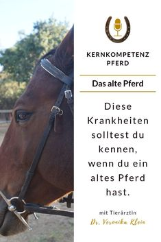 Episode Krankheiten im Alter – www. Horse Riding, Alter, Pony, 21st, Horses, Animals, Wallach, Tricks, Face Expressions
