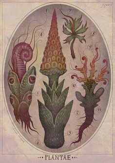 PLANTAE V - art print This is a print of an illustration from the PLANTAE series depicting various peculiar plant species. The plants were Botanical Illustration, Illustration Art, Crystal Drawing, Nature Plants, Plant Species, Art Plastique, Fantasy Creatures, Botanical Prints, Cute Art