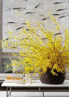 Forsythia, super early blooming, vivid color covering branches