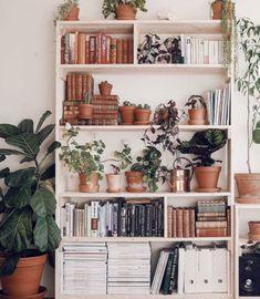 Urban Jungle - plants - green