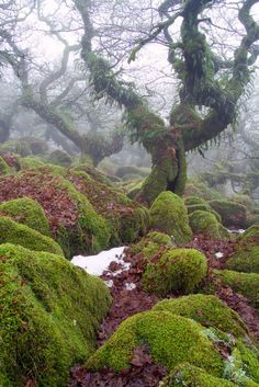 Wistman's Wood - one of only three remote high-altitude oakwoods on Dartmoor, Devon, England. Beautiful World, Beautiful Places, Devon And Cornwall, English Countryside, Belle Photo, Land Scape, The Great Outdoors, Wonders Of The World, Mother Nature