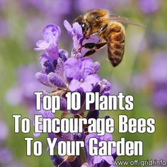 Top 10 Plants To Encourage Bees To Your Gardena