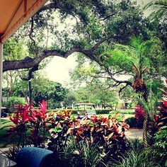 The view from Christine's is like a tropical wonderland. #lynning #ilovefl #nature ☀️