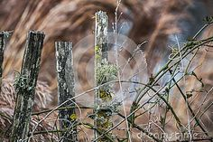Wooden fence with mossy and lichens