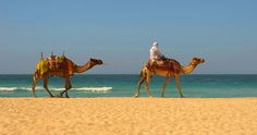 camel ride on the beach in Morocco =)