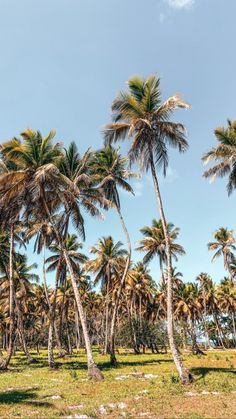 Palmtrees in Boipeba - Brazil Brazil, Wallpapers, Photo And Video, Videos, Plants, Instagram, Wallpaper, Flora, Plant