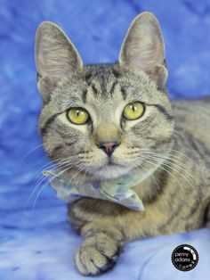 High kill shelter Meet MCGEE a Petfinder adoptable Domestic Short Hair Cat | Nashville, TN | Petfinder.com is the world�s largest database of adoptable pets and pet care information. Updated daily, search Petfinder for one of over 300,000 adoptable pets and thousands of pet-care articles!