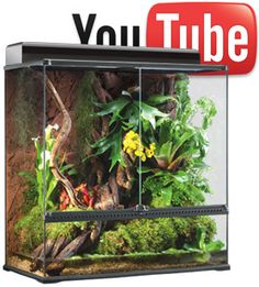 """Show us how you make your reptile or amphibian feel at home using Exo Terra® products and you could have a chance to win the Exo Terra® Large X-Tall Natural Terrarium (PT2609).    Here's what you need to do!  Just make a video showing how """"at home"""" your pet feels in its Exo Terra® terrarium set-up, then post the video of the habitat on YouTube® and send us the link before the contest close date of August 31, 2012 for your chance to win."""