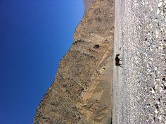 사막 위의 또다른 생명체, 낙타