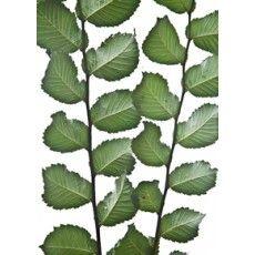Plant Leaves, My Photos, Plants, Design, Planters, Plant, Planting
