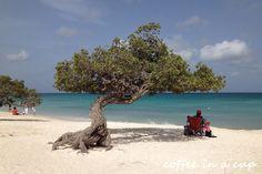 My Guide to Aruban Beaches | Aruba Tourism Blog | Aruba.com