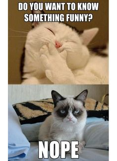 Grumpy cat... you can never have too much grumpy cat