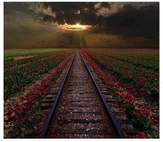 """""""Love will wreck your heart like a derailed train. So choo-choose your partner wisely.""""  ― Jarod Chintz"""