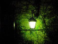 Lampione nella notte #streetlamp #light #night #nature #plants #green #