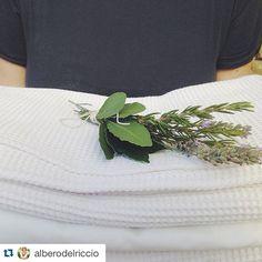 #trasimenolake @alberodelriccio C'è qualcosa di meglio della biancheria fresca di pulito che odora di lavanda rosmarino e alloro?  by trasimeno_lake