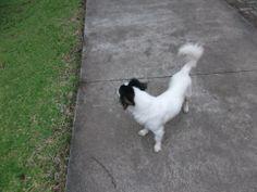 ¡Mis perros que amo mucho! ese llamase Bethoven