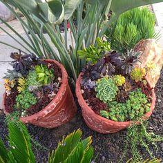 Succulents, Landscaping, Plants, Diy, Bricolage, Succulent Plants, Diys, Planters, Landscape Architecture