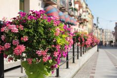Pomysł na ukwiecenie: pelargonia w skrzynkach   Inspirowani Naturą I flower decor in boxes atech.pl-eu