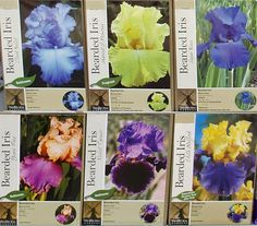 Our iris bulbs are in! Mid-August through early September is the perfect time to plant, move, and divide iris since several weeks of nice weather still remain before winter, allowing the rhizomes time to develop strong root systems. A little time spent in your garden this fall will result in years and years of gorgeous flowers! Supplies are limited so don't delay!