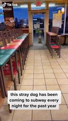 A stray dog visits their Subway each night. Renews my faith in world to see people doing this Cute Little Animals, Cute Funny Animals, Funny Dogs, Cute Animal Videos, Funny Animal Pictures, Cute Gif, Funny Cute, Cute Stories, Happy Stories