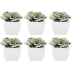 Abigail Ahern Moab Mini Succulent - Set of 6 (4.540 RUB) ❤ liked on Polyvore featuring home, home decor, floral decor, fillers, plants, backgrounds, decor, detail, embellishment and outside artificial plants