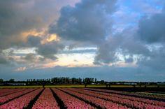 Flowers III by Watze D. de Haan