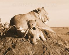Playful baby lion and mom in sepia.