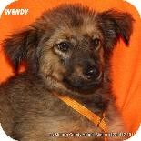 Gone  Urgent rural kill shelter FULL  Desperate need for Adopters Fosters OR Rescue most don't make it here Madisonville, TN - Shepherd (Unknown Type). Meet Wendy a Puppy for Adoption.