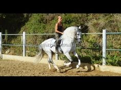 Cerezo - 07 2016 Billy - www.elegante-andalusier.com - YouTube Andalusian Horse, Youtube, Horses, World, Animals, Cherry Tree, Animales, Animaux, Animal