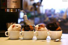 Sweet Coffees: Caffé Latté, Cappuccino, Caramel Macchiato & Doppio Espresso...