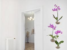 Články :: ŠTÝL :: Závěsné květináče Evervit řad Flying Orchids a Jungle Jungles, Orchids, Oversized Mirror, Sweet Home, Plants, Furniture, Home Decor, Decoration Home, House Beautiful