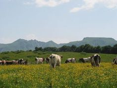 puy-de-sancy-Auvergne